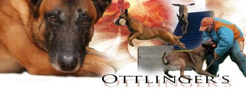 Ottlingers Malinois