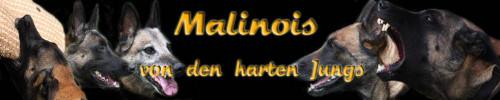 Malinois von den harten Jungs