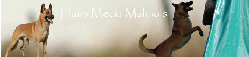 Haus Mecki Malinois
