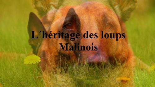 L_heritage des loups