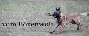 Boexenwolf