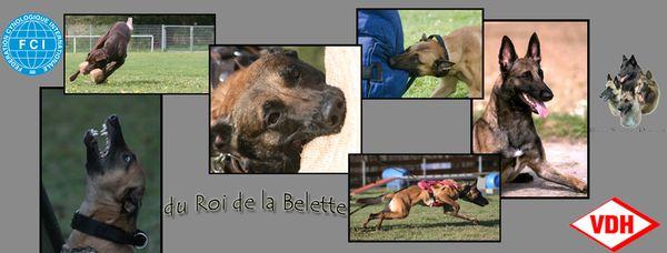 du Roi de la Belette